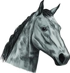 horse head of a black grey white mane  sketch vector illustration