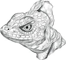 Lizard Reptile Head Basilisk B...
