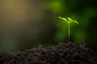Seedlings are growing from fertile soil. And the morning sun shining on the concept of agriculture.