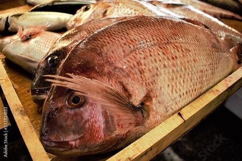 Fényképezés Fresh fish at Tsukiji fish market in central Tokyo, Japan