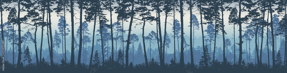 Fototapeta Forest landscape background. Trees pines at dawn. Nature.  Tourism and travelling. Coniferous forest, vector silhouette