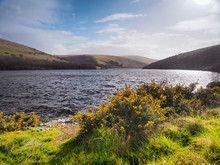 View Across Meldon Reservoir On The West Okement River With Yellow Gorse And Sun Reflecting On The Water And White Wispy Clouds, Dartmoor National Park, Devon, UK