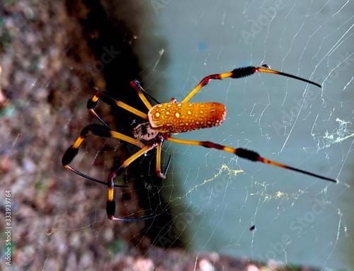 Spiders Canvas Print
