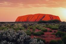 Uluru Rock At Sunset, Red Cent...