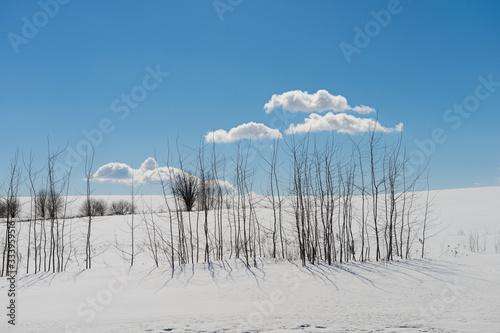 Winter landscape with snowy white field, trees and blue sky Tapéta, Fotótapéta