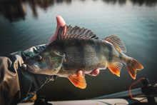Fishing Background. Trophy Fis...