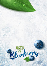 Vector Realistic Blueberry Illustration And Leaves On White Stone Background