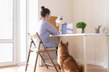 Covid-19 Working From Home Concept. Woman Using Laptop, Shiba Inu Dog Sleep Near Her
