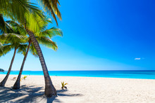 Palm Trees On The Caribbean Tr...