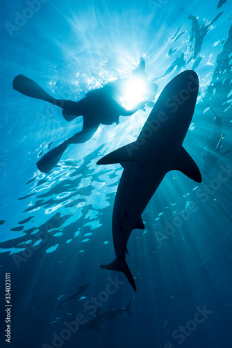 Photo SCUBA Diver and Reef Shark silhouette in sun rays