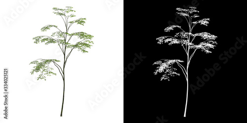 Front view of tree (Forest) png with alpha channel to cutout made with 3D render