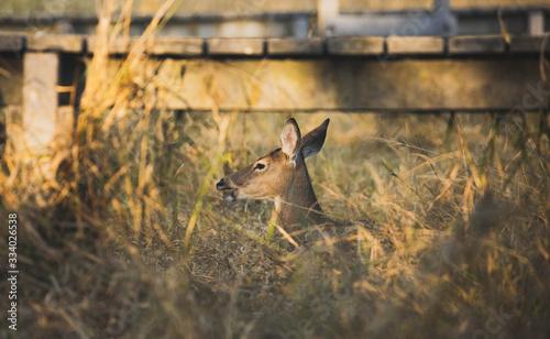 Photo Bambi