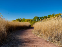Beautiful Landscape , Trail With Miscanthus Of Clark County Wetlands Park