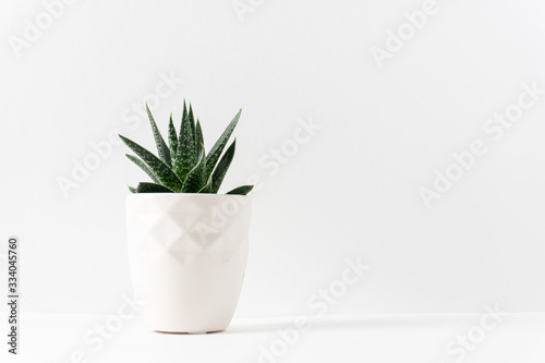 Fotografía Green succulent houseplant in a white vase on the left side of  a white table wi