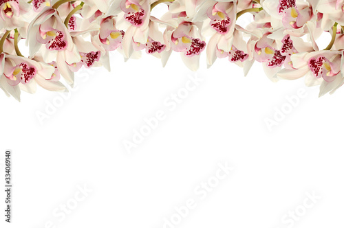 Fototapeta Orchid flowers Isolated on white background.Flower border. White  orchid on a white background Floral banner. orchid flower layout. Flower collage. Spring tender floral background.  obraz