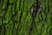 Tree Bark With Green Moss And ...