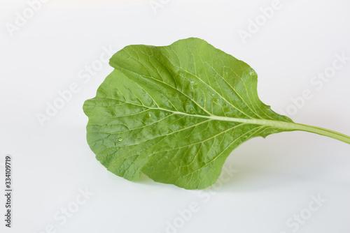 Chinese Cabbage-PAI TSAI or Brassica chinensis Jusl var parachinensis (Bailey) w Canvas Print