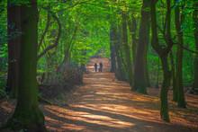 Walking In Highgate Wood In No...