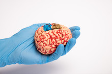 High Angle View Of Doctor Holding Brain Model With Colored Parts On White Background, Alzheimer Disease Concept
