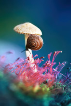 Lovely Pretty Little Snail On ...
