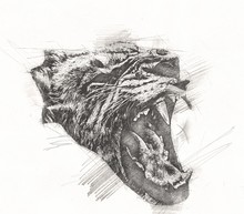 Lion Art Illustration Drawing Grunge Vintage