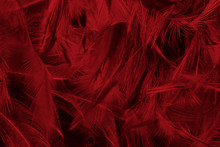 Beautiful Dark Red Maroon Feat...
