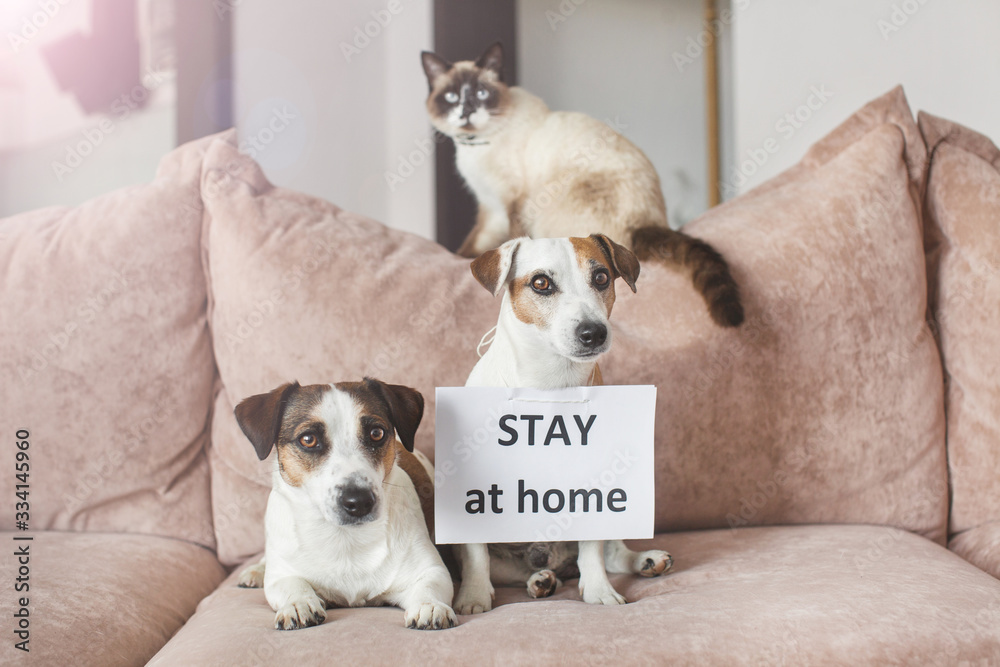 Fototapeta Cute dog and cat at home with blank card