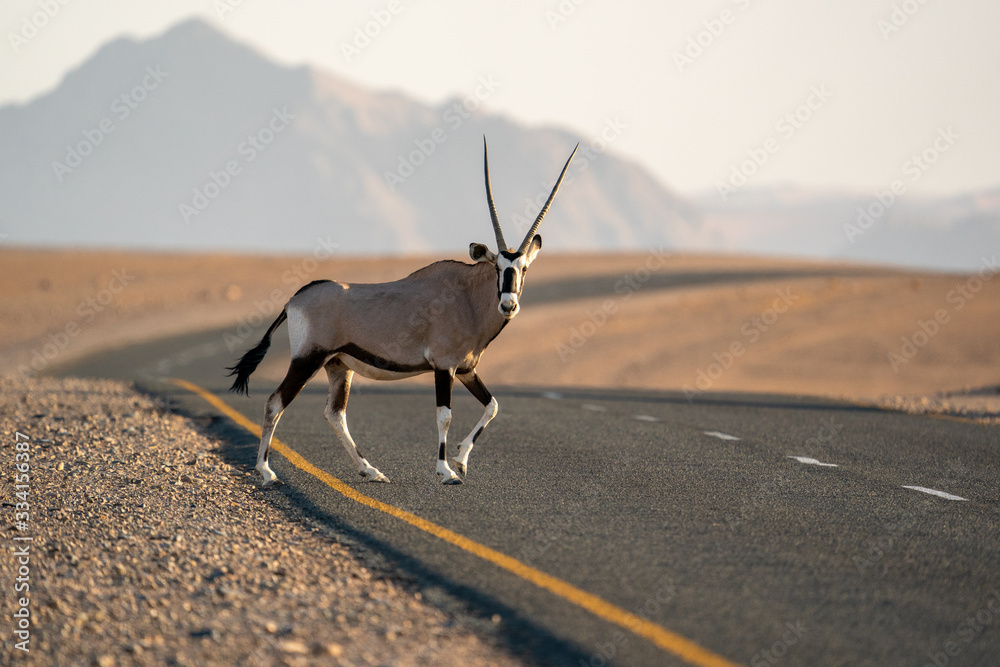 Fototapeta orice sulla strada