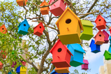 Closeup Birdhouses On A Mandarin Tree