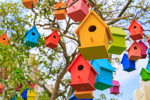Photo Closeup birdhouses on a mandarin tree