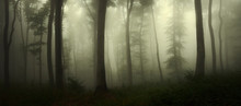 Dark Scary Woods, Panoramic Fo...