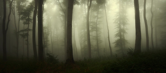 dark scary woods, panoramic forest landscape