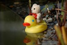 Little Bear Riding On A Duck