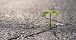 canvas print picture - Eine kleine Pflanze wächst aus einem Riss in der Straße
