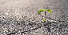 Eine Kleine Pflanze Wächst Au...