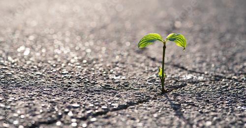 Eine kleine Pflanze wächst aus einem Riss in der Straße Canvas Print