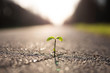 Eine kleine Pflanze wächst aus einem Riss in der Straße