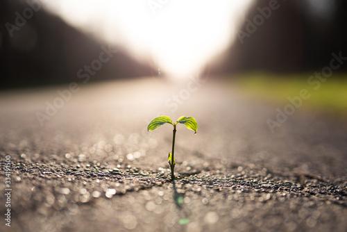 Eine kleine Pflanze wächst aus einem Riss in der Straße Wallpaper Mural