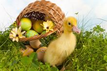 Easter Duckling In The Garden