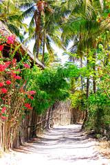 piękna egzotyczna uliczka z palmami w tle