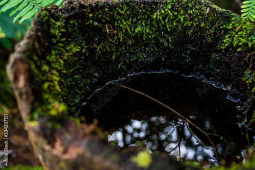 Photo Very close-up of stagnant water in a tree