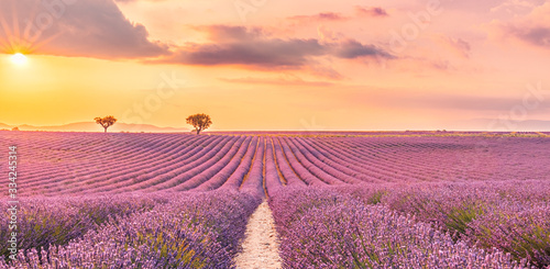 Fototapety przestrzenne  wonderful-scenery-amazing-summer-landscape-of-blooming-lavender-flowers-peaceful-sunset-view-agriculture-scenic-beautiful-nature-background-inspirational-concept