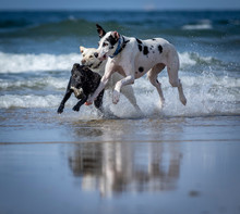 Dogs Playing In The Water At The Beach