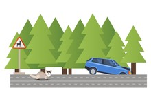 Car Involved Accident, Vehicle Crash Forest Road, Fell Ditch, Machine Accident Due Wild Animal, Isolated On White, Flat Vector Illustartion. Warning Sign Deer, Woodland, Pine Dense Forest.