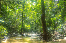 Natural Stream From Mountain A...