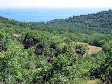 Sea View From The Coastal Mountains. The Coastal Hills Are Surrounded By Dense Vegetation.