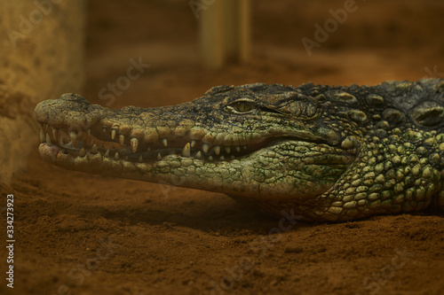 Photo Crocodile with mouth open