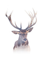 Double Exposure Of A Deer With...