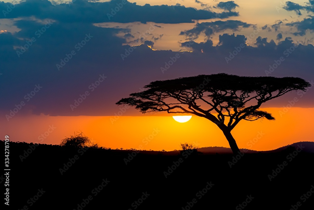 Fototapeta Mesmerizing view of the silhouette of a tree in the savanna plains during sunset