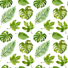 Watercolor Tropical Pattern Of...